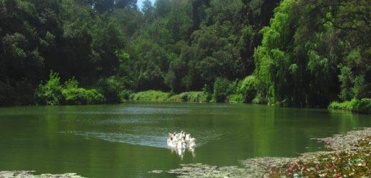 Jardín Botánico: El entorno natural de Viña del Mar