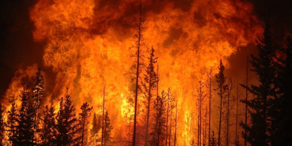 """""""Duras y complejas"""": Corporación Chilena de Madera se refiere al inicio a la temporada de incendios forestales"""