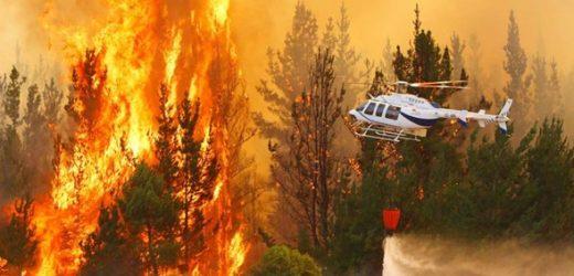 Incendios forestales: 37% de los siniestros son intencionales según la Conaf